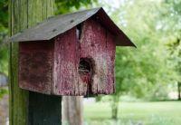 Birdhouse . .