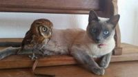 The owl and the pussy cat....