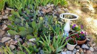 backyard flora