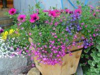 Alaska Flower Pot