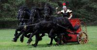 Friesian Chariot