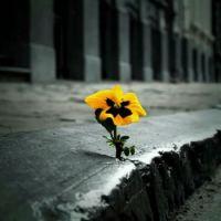 flor groga