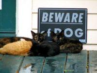 Beware of dog - hah!