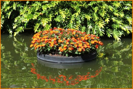 A planter gently floating by...