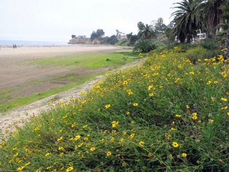 Yellow flowers and beach