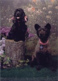 Shelby & Maggie 2005