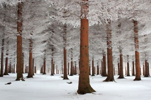 Winter in the forest...