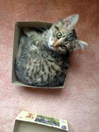 kitties & puzzles