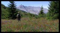 The Rebirth of Mt. St. Helens