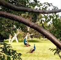 Clovelly Golf Course, S.Africa