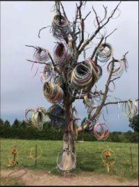 The elusive hula-hoop tree in flower, found in Amber, Iowa.