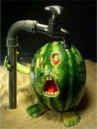 oh my melon