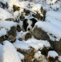 Boo in the woodpile