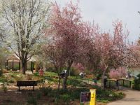 Entrance to Jerold Binkley's Tulips