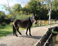 Pony on bridge