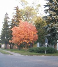 Great Fall Colours