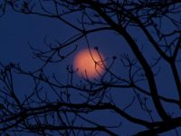 tree branches at night- hard
