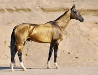 Solid gold horse, worth its weight...