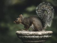 Squirrel on display in Highland Park, United States