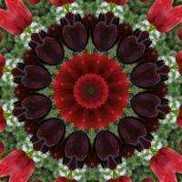 kaleidoscope 314 black tulips large