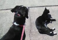 Lulu's kitty friend