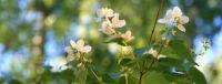 yasmin flowers