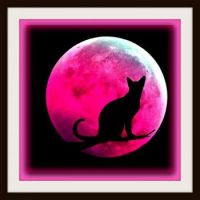 Pinknblack Cat in the Moon