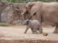 Tucson Zoo