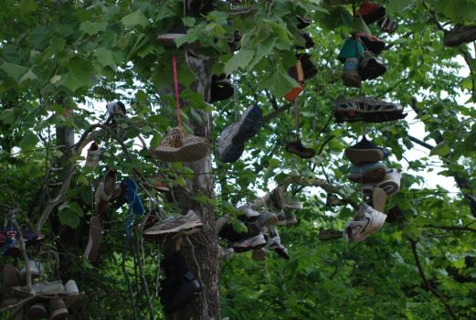 Shoe tree found on the roadside...?