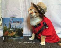 Cat Icon Game #40 - please identify!