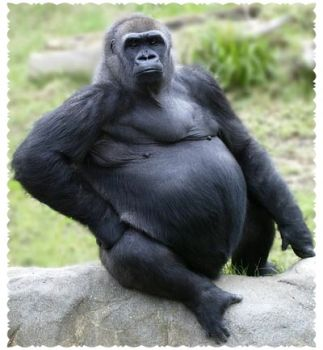 Write a Caption!  gorilla in black