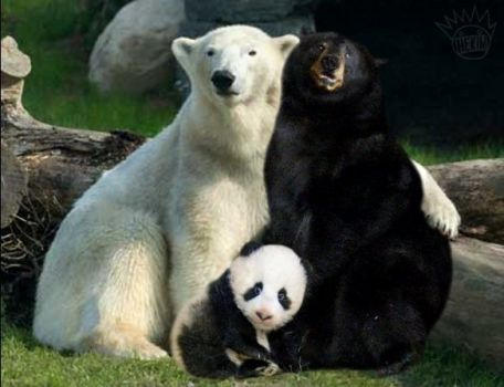 Now I see where panda bears come from. Who'd of thought it!!!
