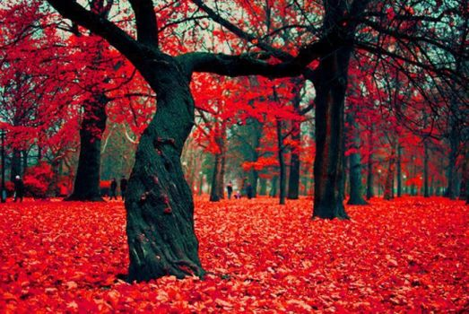 The Crimson Forest in Gryfino, Poland