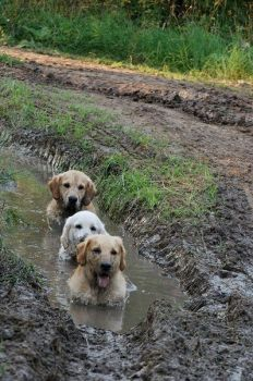 Dogs Just Love a Good Ditch