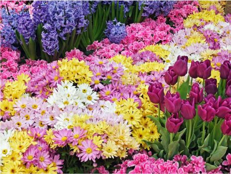 Very colorful flowers!!!!