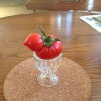 Tomato chick I grew
