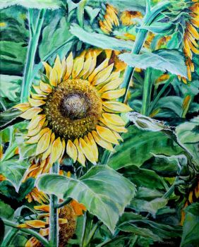 sunflower I painted
