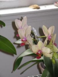 My Orchids!