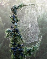 Spider web wonder