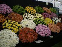 Bath Spring Flower Show