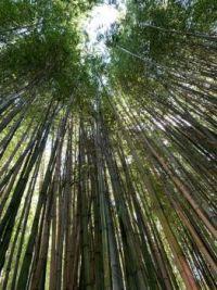 Tall Trees, Hamilton Gardens NZ