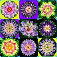 Passion Flowers Collage