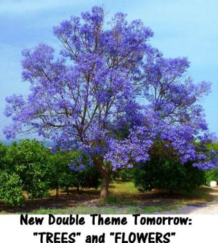 "New Double Theme Tomorrow:  ""TREES"" & ""FLOWERS""  It should be a pretty week.  Hugs."