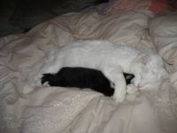 Papa Chouy Cat at 19 with Baby Max