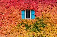 Fall Wall by Ivy