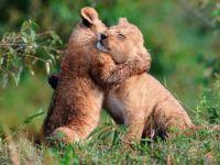 Things that make you say Ahhh...Gimme hug...