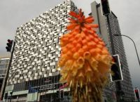 The Cheesegrater carpark in Sheffield, with red hot poker
