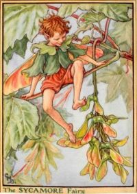 The Sycamore Fairy (smaller size)