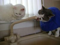 Ash and Freya - the queue to get at the tap