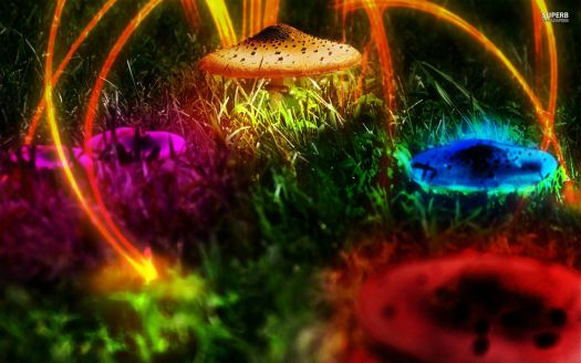 colorful-mushrooms